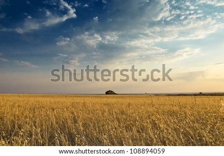 field of oat against sky - stock photo