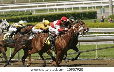 Field of Racing Horses and Jockeys - stock photo