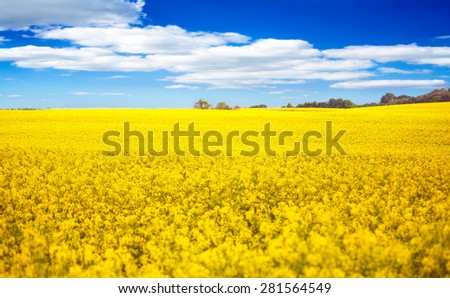 Field of rapeseed and blue sky - stock photo