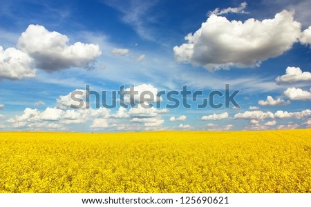 field of rapeseed with beautiful cloud - plant for green energy - stock photo