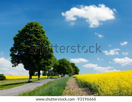 field of rapeseed with road and alley - stock photo