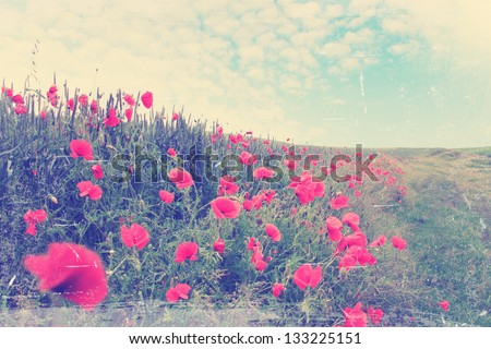 field of red poppies blooming, summer landscape,vintage - stock photo