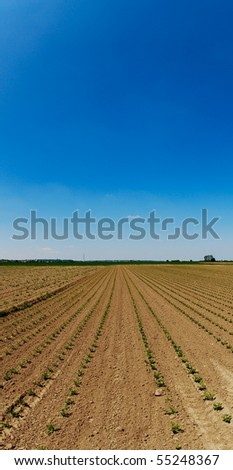 Field of seedlings on a summer day