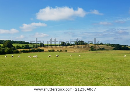 Field of Sheep. Green pastures on the rolling hills of Southern England. Summers day with blue skies and white clouds. - stock photo