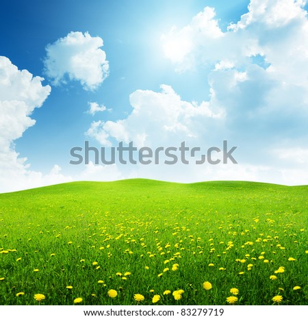 field of spring flowers - stock photo