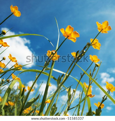 Field of spring flowers and blue sky. - stock photo