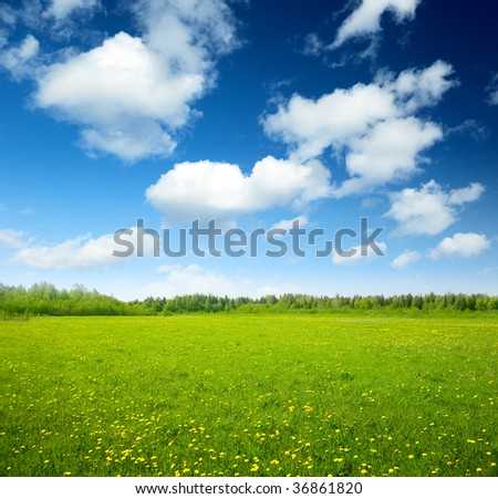 field of spring flowers and perfect sky - stock photo