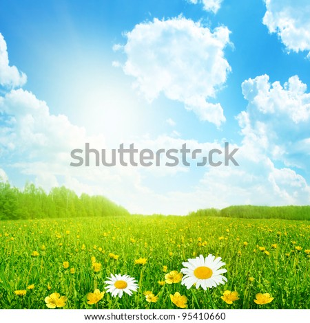 Field of spring flowers and sun on blue sky. - stock photo