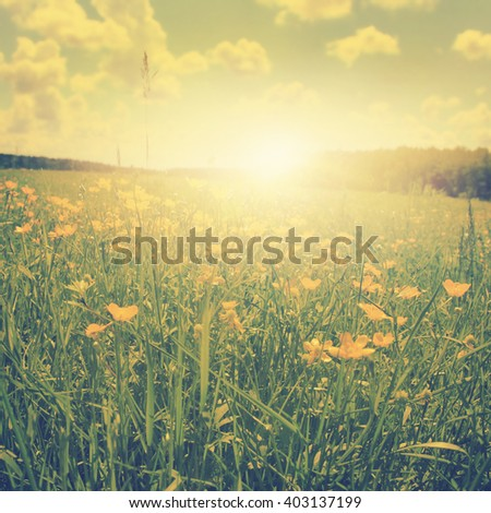 Field of spring flowers at sunset in vintage style. - stock photo