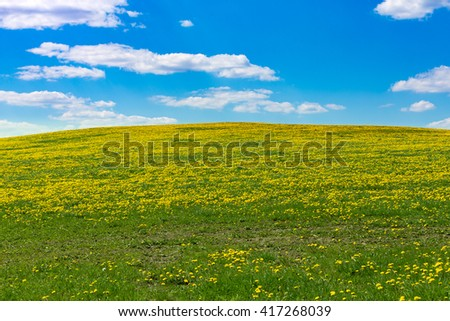 Field of spring flowers dandelions, Dandelion meadow. Yellow dandelion on meadow hill, against blue sky with clouds. Many dandelions on green. Beautiful countryside