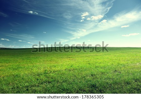 field of spring grass - stock photo