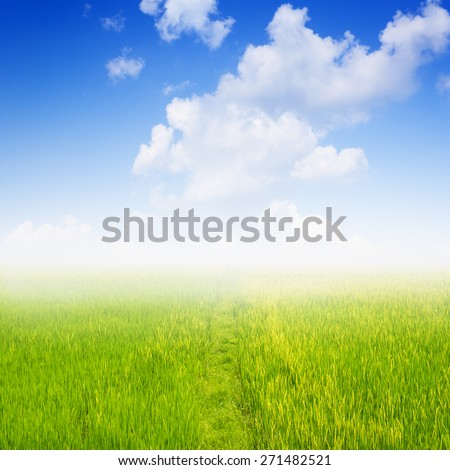 field of spring grass against blue sky with cloud.
