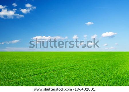 field of spring grass and beautiful sky