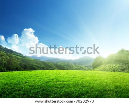 field of spring grass and mountain - stock photo