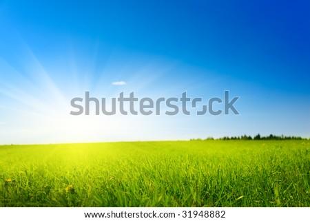 field of spring grass (shallow DOF) - stock photo