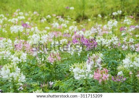 field of summer flowers - stock photo