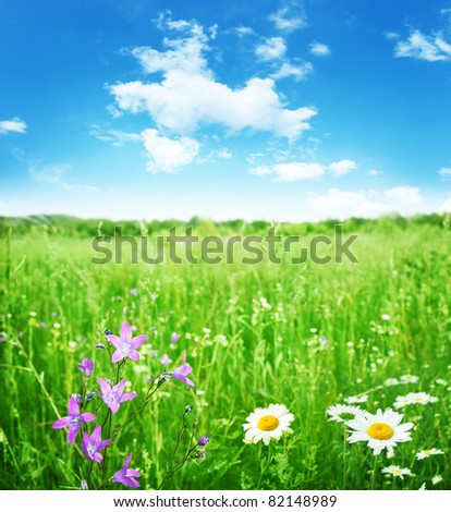 Field of summer flowers and blue sky. - stock photo