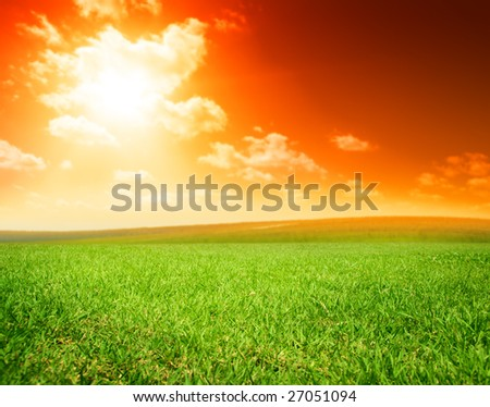 field of summer green grass
