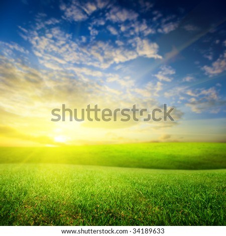 field of summer green grass and sunset (shallow DOF)