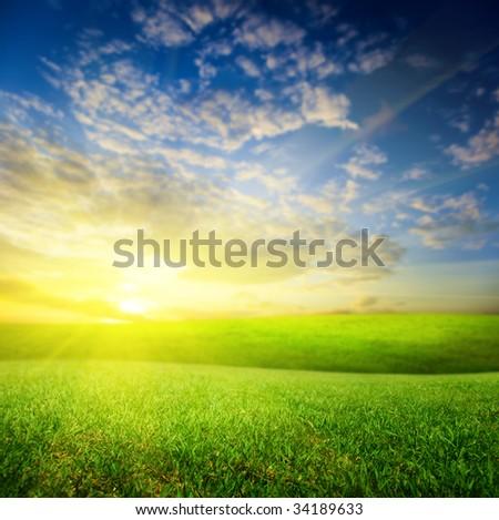 field of summer green grass and sunset (shallow DOF) - stock photo
