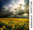 Field of sunflower against the sky - stock photo