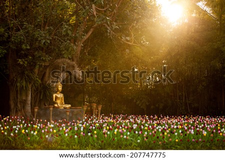 Field of tulips in Wat Phan Tao Temple, Chiangmai Thailand - stock photo