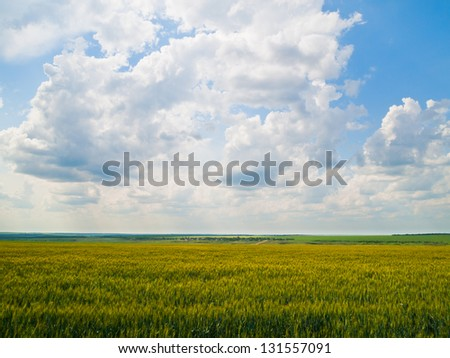 Field of unripe wheat with deep cloudy sky on the background - stock photo