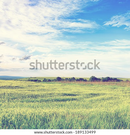 Field of wheat, cloud and mountain. Vintage retro style