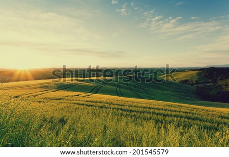 Field of wheat in the rays of the rising sun. Tuscany. Italy - stock photo