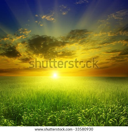 field of wheat on a background sunset - stock photo