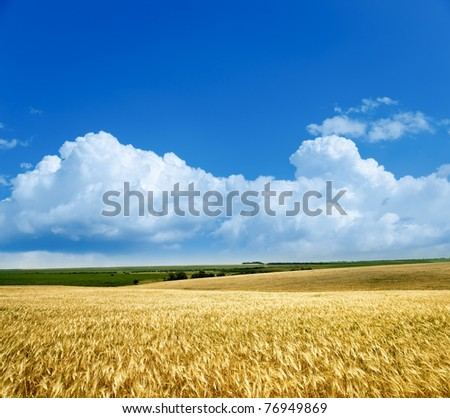 field of wheat under cloudy sky - stock photo