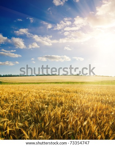 field of wheat under cloudy sky with sun - stock photo