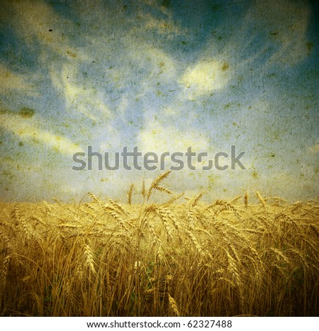 Field of wheat; vintage photo - stock photo