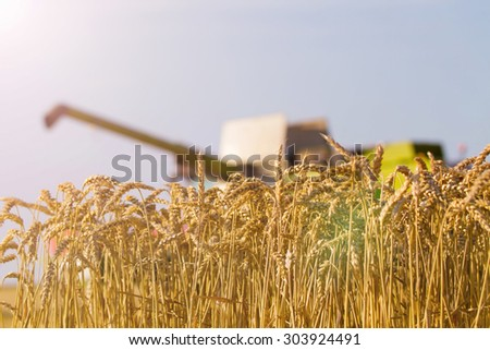 Field of wheat with combine harvester in the background  - stock photo