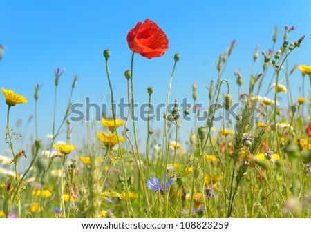 Field of wild flowers in summer - stock photo