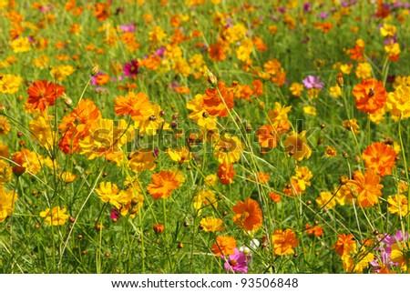 field of wildflowers - stock photo
