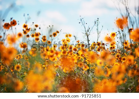Field of wildflowers blossom - stock photo