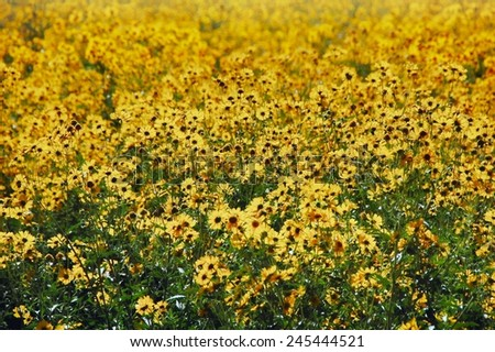 Field of wildflowers near Taos - stock photo