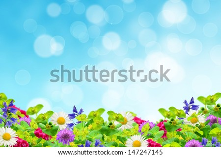 Field of wildflowers on the sky background - stock photo