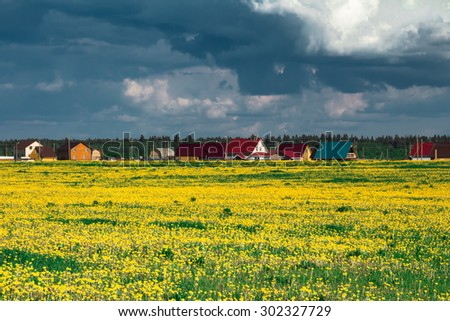 Field of yellow dandelions against the cloudy sky. Rural landscape. - stock photo