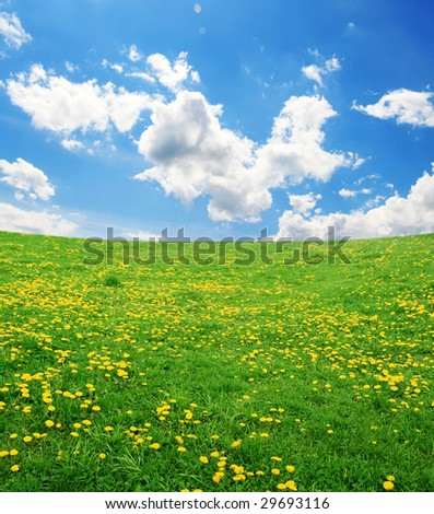 field of yellow dandelions and blue cloudy sky