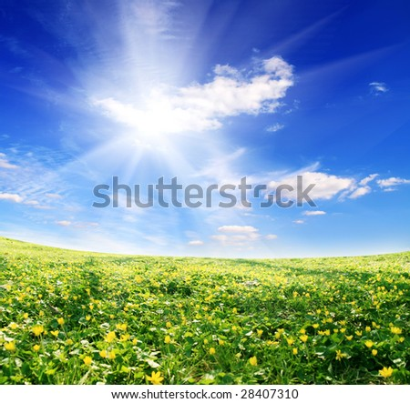 field of yellow flowers and sun sky