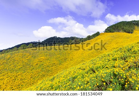Field of yellow flowers Situated on the foothills of the mountains Cloud covered the sky - stock photo