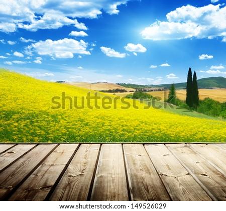 field of yellow flowers Tuscany, Italy  - stock photo