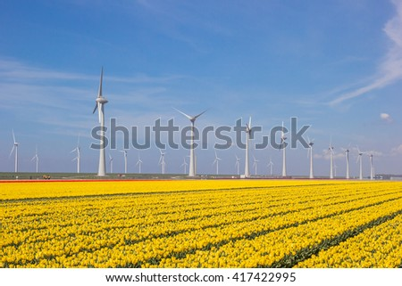 Field of yellow tulips and turbines in Holland