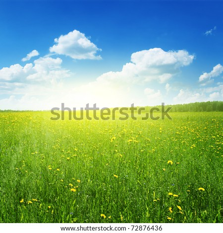 Field of yellow wildflowers at sunset time. - stock photo
