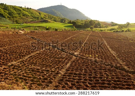 Field of young fresh green on the flor - stock photo