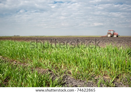 field of young wheat in the spring - stock photo
