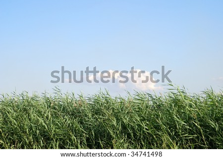 field on a background of the blue sky with cloud