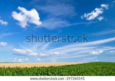 Field on a sunny day - stock photo